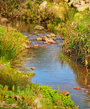 Small creek and vegetation Royalty Free Stock Photos