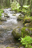 Small creek vertical Royalty Free Stock Image