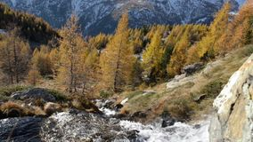 Small creek waterfall in Italian Alps mountain durin autumn season with red larches woods. Nature scape outdoor stock video