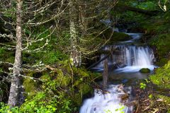 Small Creek Waterfalls Royalty Free Stock Image