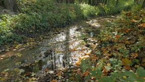 Small creek in the woods. Sunny warm autumn day. stock video