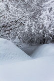 Small Crevice In The Snow. A small crevice under trees covered in fresh snowfall Royalty Free Stock Photo