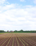 Small crops in rural landscape Stock Images