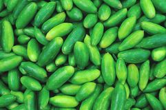 Small cucumbers Royalty Free Stock Photos
