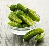 Small cucumbers in bowl Stock Images