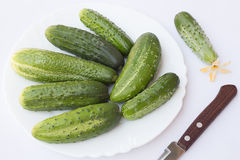 Small Cucumbers. On a White Plate Royalty Free Stock Photos