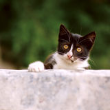 Small curious kitty Royalty Free Stock Photography