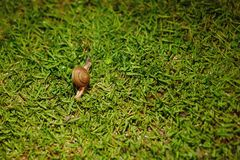 Small curious snail on green grass stock photo
