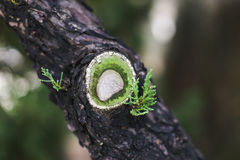A small cut on the tree trunk with beautiful green leaves. Stock Images