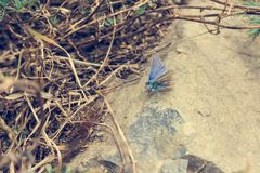 Small and cute blue butterfly sitting on a stone. Autumn foliage stock image