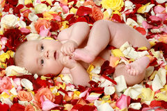 Small cute boy in rose-petals. Beautiful baby boy in a rose plants stock photography