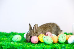 Small cute bunny with easter eggs Stock Photography