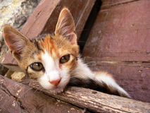 Small cute cat Royalty Free Stock Image