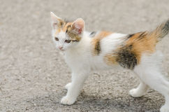 Small Cute Cat Stock Images