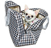 Small cute dog in bag Stock Image
