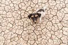 Cute dog are sitting in a dry sandy desert and looking up - dirty Jack Russell Terriers stock photography