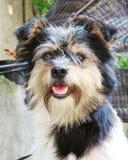 Small cute furry dog stock image