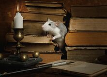 Free Small Cute Gray Rat Crawls Between Old Books On The Table Stock Images - 170266224