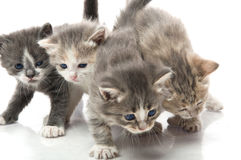Small cute kitten , Stock Photo