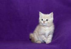 Small Cute Kitten Stock Photo