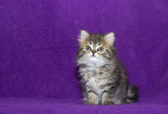Small Cute Kitten Royalty Free Stock Photos