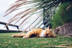 Small cute kitten cat sleeping outside in the park with flower g. Rass background Stock Images