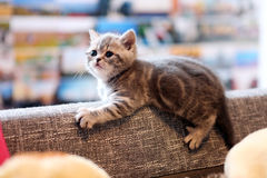 Small cute kitten Royalty Free Stock Photography