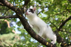 Small cute kitten climbing the tree Stock Image