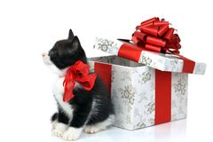 Small cute kitten with gift box Stock Photography