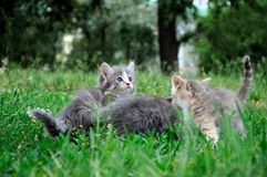 Small cute kitten on grass , close-up Stock Image