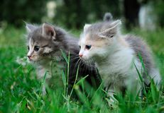 Small cute kitten on grass , close-up Stock Images