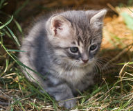Small cute kitten Stock Image