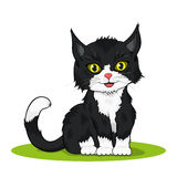 Small cute kitten Royalty Free Stock Images