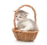 Small cute kitten sitting in a basket, close-up Stock Image