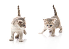Small cute kittens , close-up Stock Photo