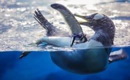 Cute penguin having fun in water stock photos