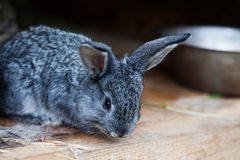 Small cute rabbit. Fluffy gray bunny on wooden background. soft focus, shallow depth of field Stock Image