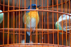 A small and cute song bird in the cage. Bird market in Hong Kong royalty free stock images