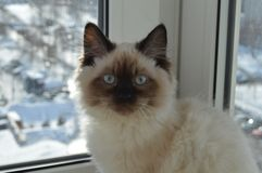 Small and cute surprised cat sitting on the window. Small cute surprised cat sitting window stock photography