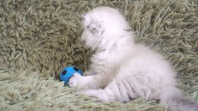 Small cute white kitten playing at football stock video footage