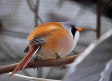 Small cute white orange and little bird sitting Stock Photo
