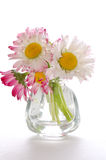 Small daisies Royalty Free Stock Photography