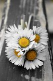 Small daisies bouquet. A bouquet of small daisies on a wooden bench Stock Photos