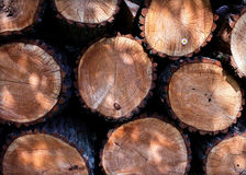 Small daisies in a felled tree. Log cabins tecture Stock Photo