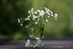 Small daisies in a glass Stock Images