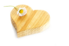 Small  daisy lying on a rough wooden heart shape, isolatet Royalty Free Stock Photos