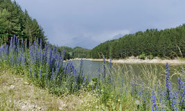 Small dam and beauty blue wildflowers Royalty Free Stock Photos