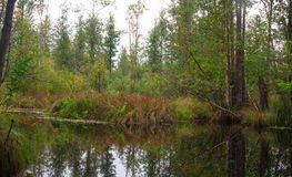 A small dark river in a deciduous forest Stock Photo