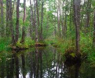 A small dark river in a deciduous forest Royalty Free Stock Image