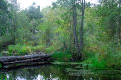 A small dark river in a deciduous forest Stock Photos